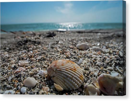 Sanibel Island Sea Shell Fort Myers Florida Canvas Print