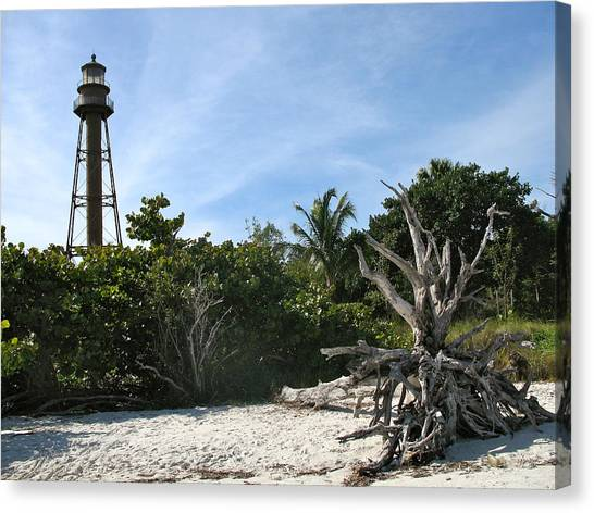 Canvas Print - Sanibel Light And Driftwood by Christiane Schulze Art And Photography
