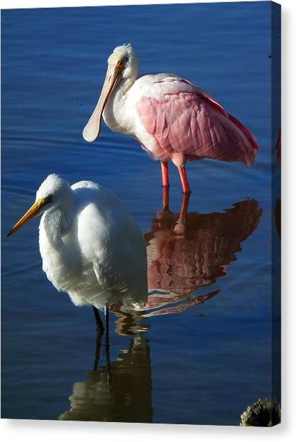 Sanibel Water Fowl Canvas Print by Wayne Skeen