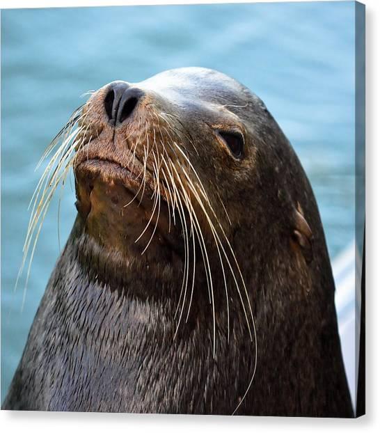 Santa Cruz Dude - Sea Lion Canvas Print