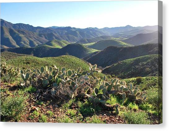 Santa Monica Mountains - Hills And Cactus Canvas Print