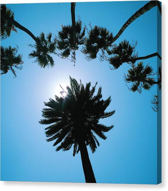 Santa Monica Canvas Print - Santa Monica Palm Trees by Robert Ceccon