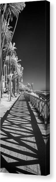 Santa Monica Canvas Print - Santa Monica Shadows And Palms by Sean Davey