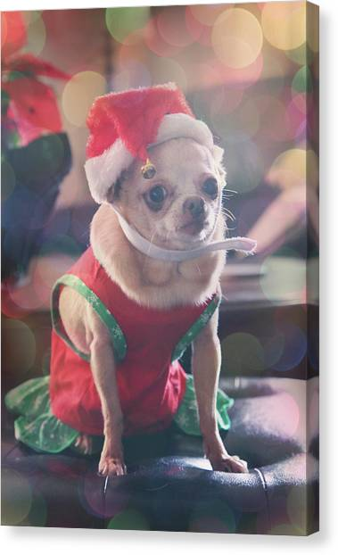 Chihuahuas Canvas Print - Santa's Little Helper by Laurie Search