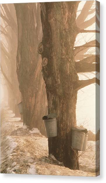 Sap Buckets. Underhill, Vermont Canvas Print