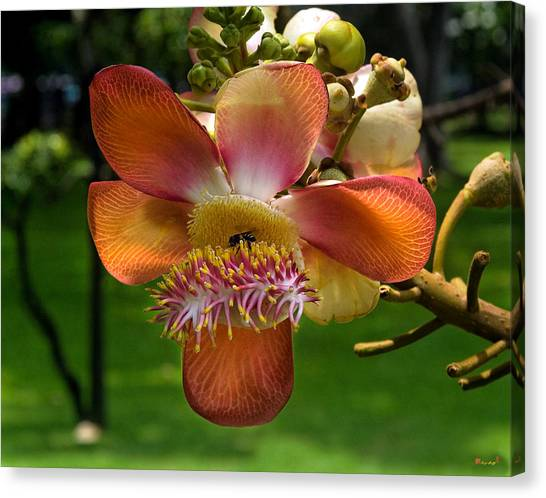 Sara Tree Flower Dthb104 Canvas Print