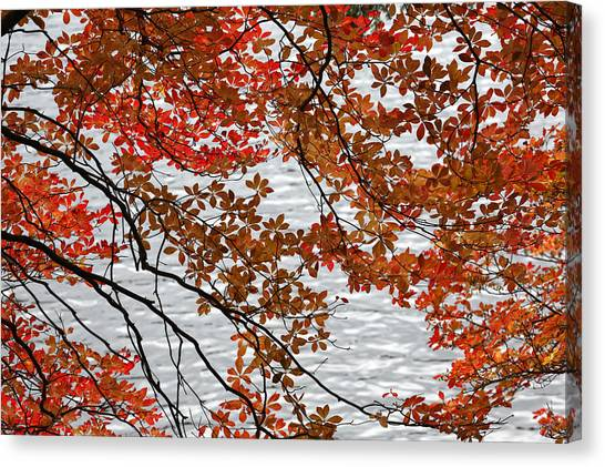 Japanese Canvas Print - The Autumnal Tints Of The Japanese Enkianthus. by IGUCHI Yasunori