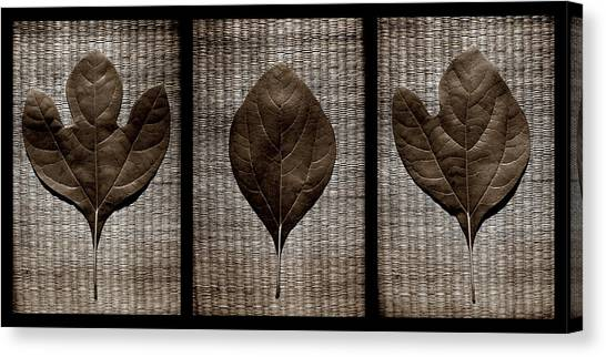 Sassafras Leaves With Wicker Canvas Print