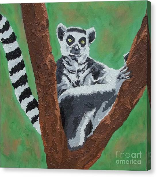 Ring-tailed Lemur Canvas Print - Sassy Socialite by Amy Pugh