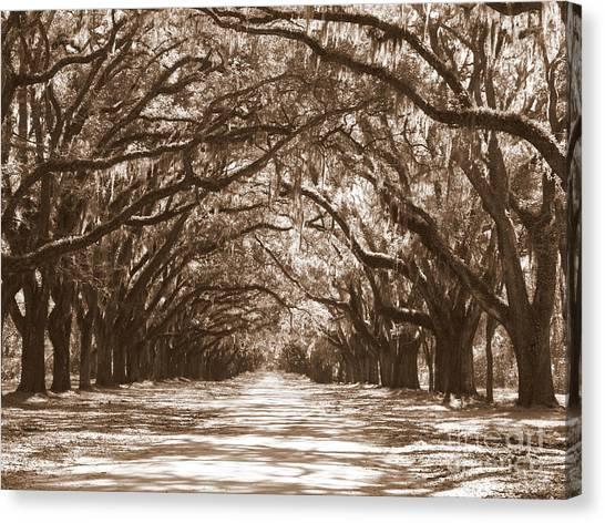 Savannah Sepia - Glorious Oaks Canvas Print