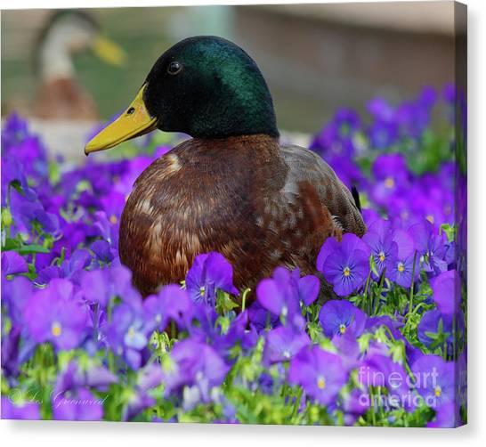 Say Quack Canvas Print