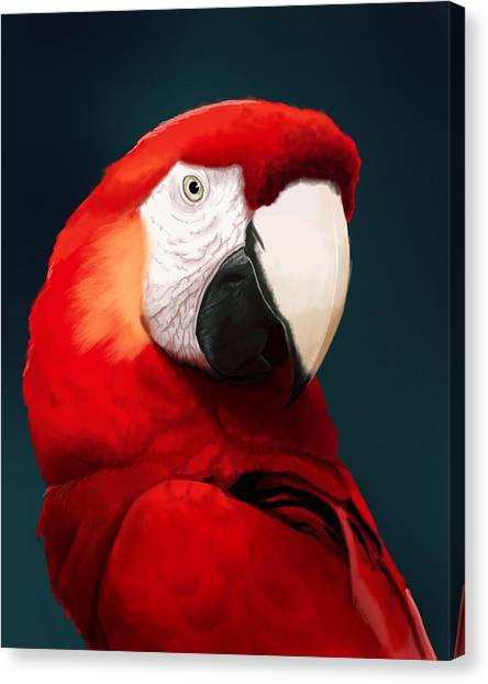 Parrots Canvas Print - Scarlet Macaw by KC Gillies
