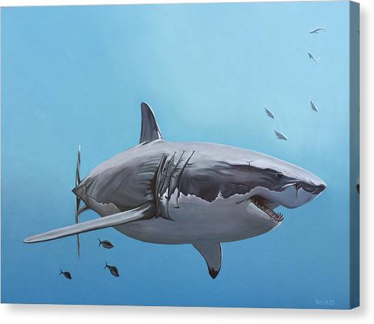 Tiger Sharks Canvas Print - Scarlett Billows Deux by Nathan Rhoads
