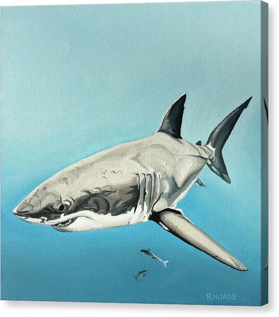 Tiger Sharks Canvas Print - Scarlett Billows by Nathan Rhoads