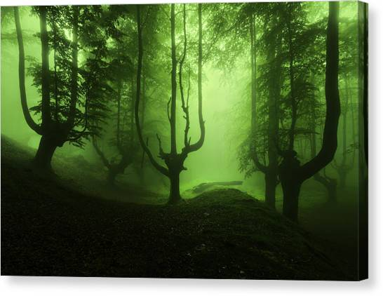 The Funeral Of Trees Canvas Print