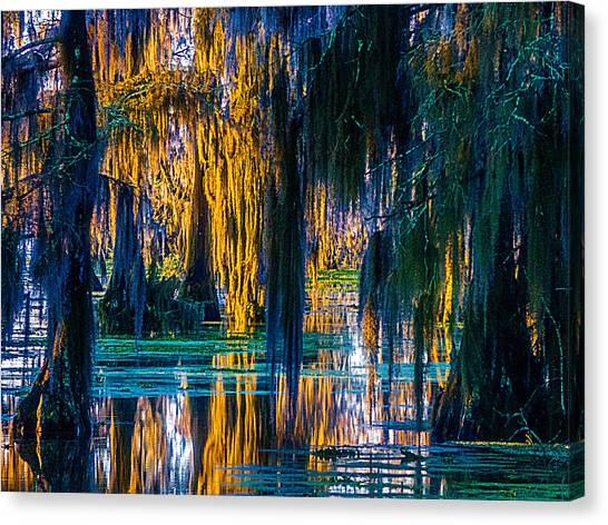 Scary Swamp In The Daytime Canvas Print