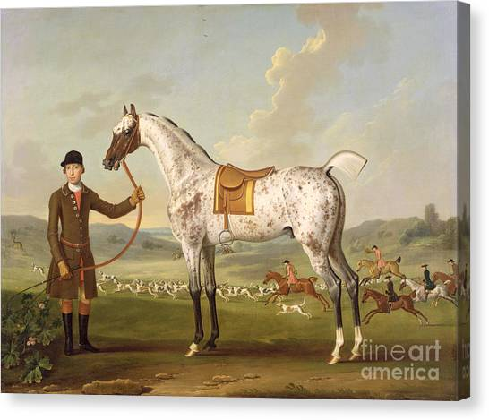 Dappled Canvas Print - Scipio - Colonel Roche's Spotted Hunter by Thomas Spencer