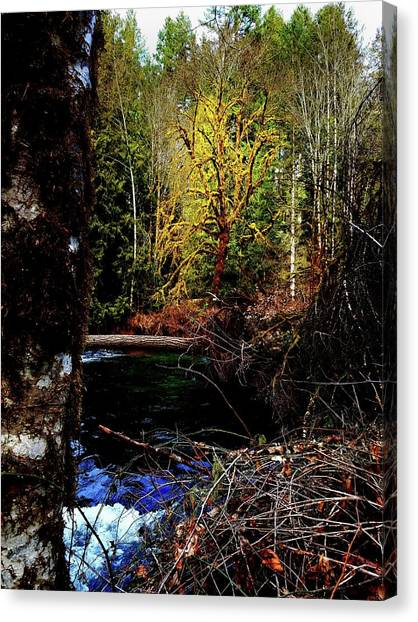 Scoggins Creek 3 Canvas Print