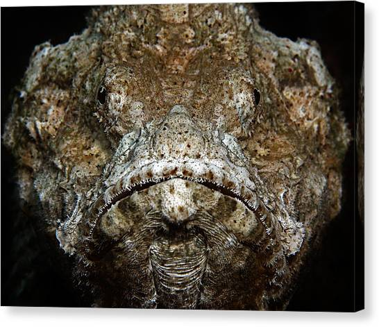 Submarine Canvas Print - Scorpionfish Portrait by Henry Jager