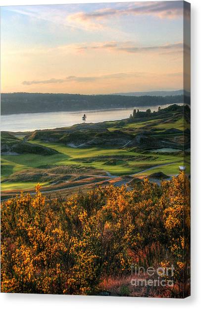Scotch Broom -chambers Bay Golf Course Canvas Print