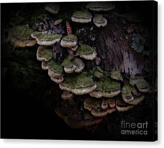 Scotopic Vision 1 - Pinecone Canvas Print
