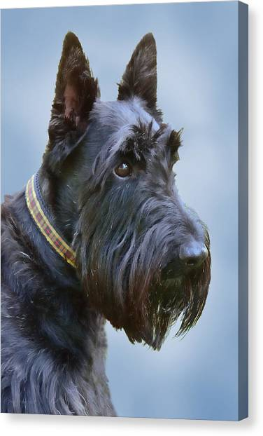 Scotty Canvas Print - Scottish Terrier Dog by Jennie Marie Schell