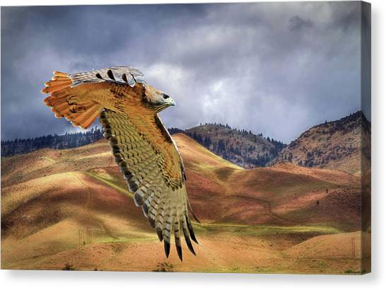 Buzzards Canvas Print - Scouting The Foothills by Donna Kennedy