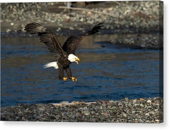 Screaming Eagle II Canvas Print