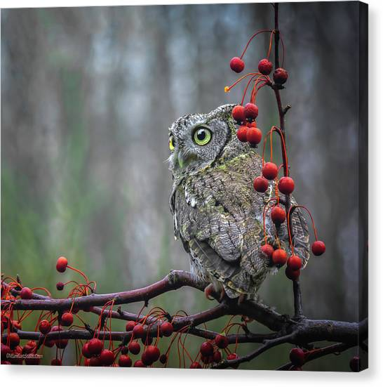 Owl Canvas Print - Screech Owl by LeeAnn McLaneGoetz McLaneGoetzStudioLLCcom