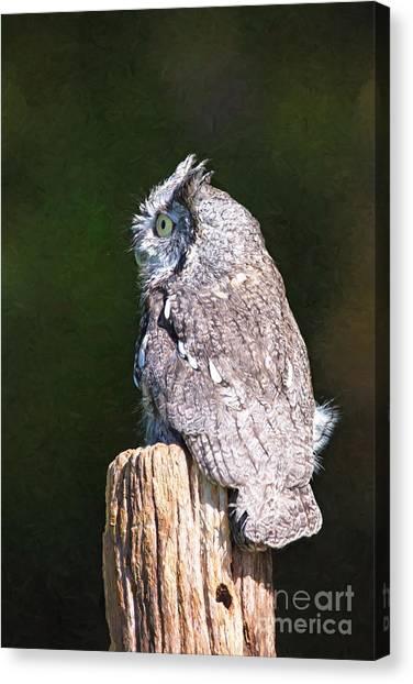 Screech Owl Profile Canvas Print