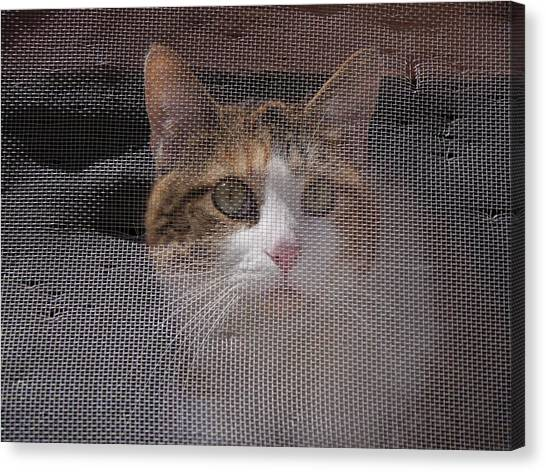 Screened Cat Canvas Print