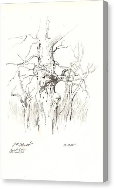 Scrub Oaks In Cottonwood Canvas Print by John Norman Stewart