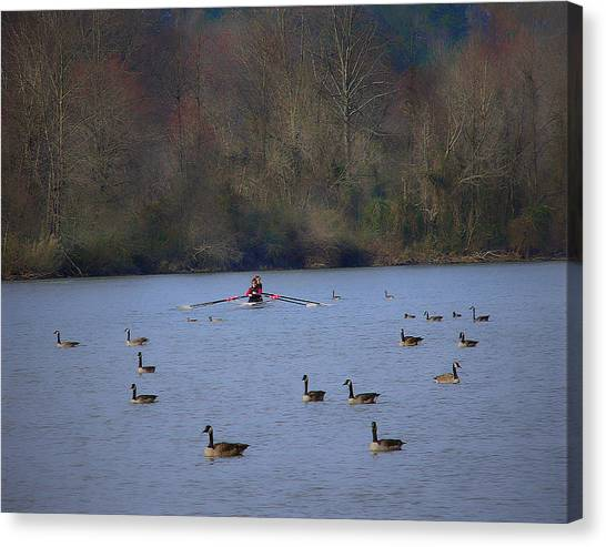 Scullers Among The Geese II Canvas Print by Frank Maxwell