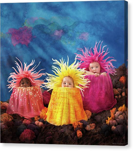 Sea Anemones  Canvas Print by Anne Geddes