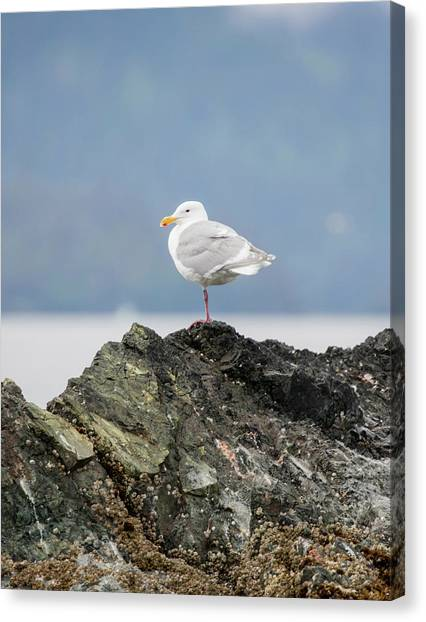 Sea Bird Perched On A Rock Canvas Print