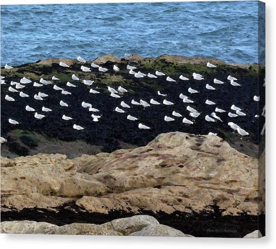 Sea Birds At Rest Canvas Print