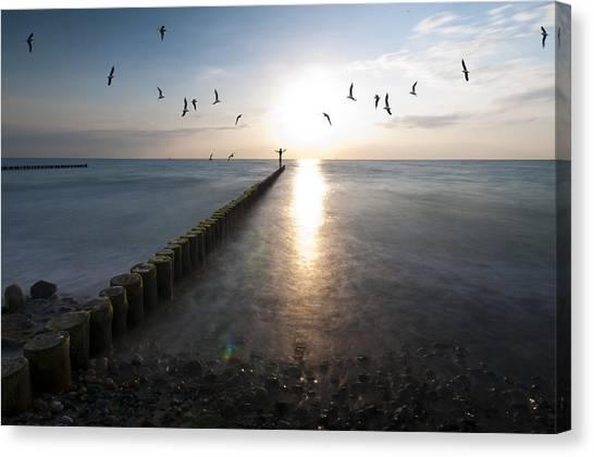 Sea Birds Sunset. Canvas Print