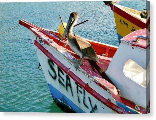 Sea Fly 1, Aruba Canvas Print