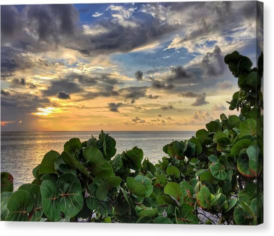Sea Grape Sunrise Canvas Print