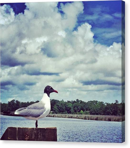 Bayous Canvas Print - Sea Gull #beautifulclouds #bird by Joan McCool