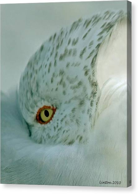 Sea Gull On A Windy Morning Canvas Print