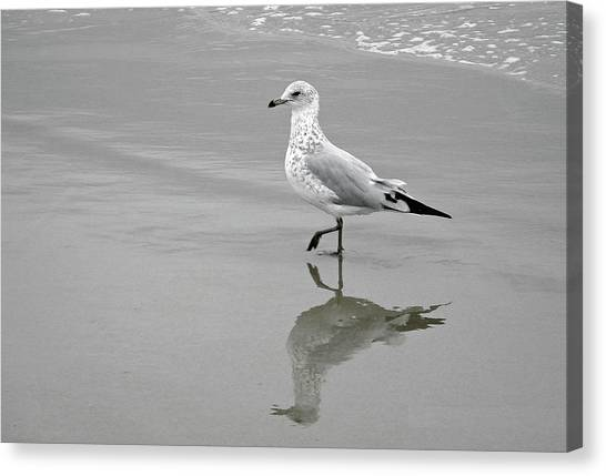 Sea Gull Walking In Surf Canvas Print