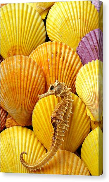 Seahorses Canvas Print - Sea Horse And Sea Shells by Garry Gay