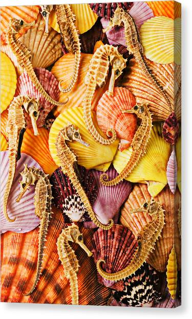 Seahorses Canvas Print - Sea Horses And Sea Shells by Garry Gay