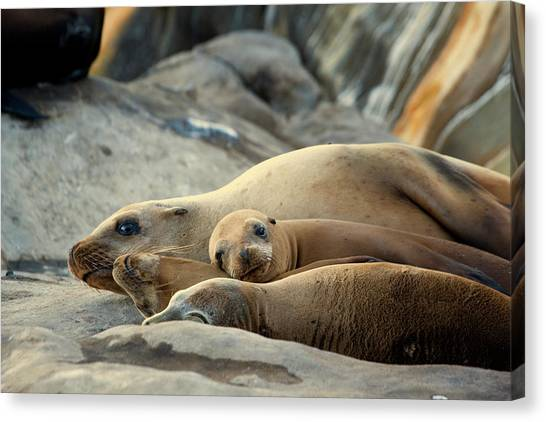 Canvas Print featuring the photograph Sea Lion Family by Mike Trueblood