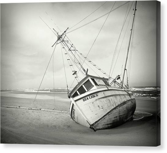 Sea Lion II - On The Beach Canvas Print by HW Kateley