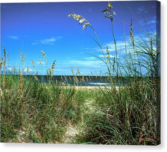Sea Oat Dunes 11d Canvas Print