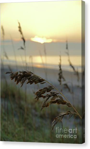 Canvas Print - Sea Oats At Sunrise by Megan Cohen
