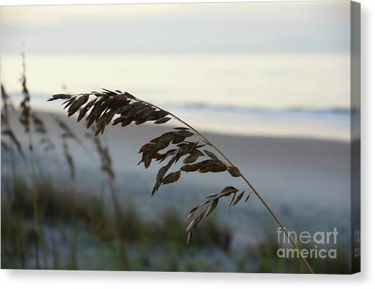 Canvas Print - Sea Oats by Megan Cohen