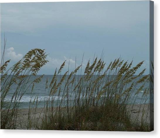 Sea Oats On Wrightsville Beach Canvas Print